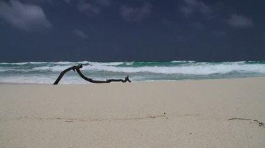 Rot på stranden — Stockvideo