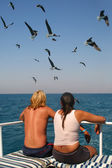 Lovers and seagulls — Stock Photo