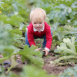 Baby girl picking up ripe zucchini — Stock Photo #42669529