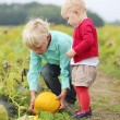 Brother with sister picking together ripe yellow pumpkin — Stock Photo