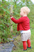 Girl gathers berries on a farm — Stock Photo