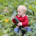 Baby girl picking up ripe zucchini — Stock Photo #42670469
