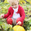 Baby girl playing with ripe yellow pumpkin — Stock Photo #42671183