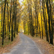 Road through autumn forest — Stock Photo #42673513