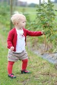Baby girl gathers berries — Stock Photo