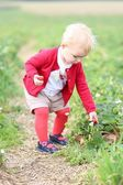 Baby girl gathers strawberries — Stock Photo