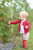 Baby girl gathers berries on a farm — Stock Photo