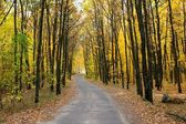 Road through autumn forest — Stock Photo