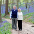 Senior couple walking in forest — Stock Photo