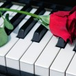 Red rose on a piano — Stock Photo