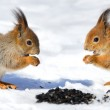 Red Squirrel — Stock Photo #50505295