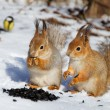 Red Squirrel — Stock Photo #50505301