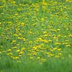 Flowers — Stock Photo #43101515