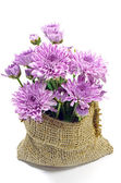 Purple Chrysanthemum Flowers. — Stock Photo