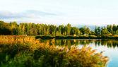 Woods tarafından çevrili gölet — Stok fotoğraf