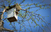 Spring starling in a tree house — Stock Photo