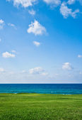Green field on the seacoast — Stock Photo