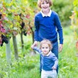Cute happy boy and his adorable baby sister picking fresh grapes together — Stock Photo #43241929