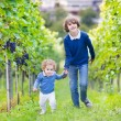 Cute happy boy and his adorable baby sister picking fresh grapes together — Stock Photo #43242569