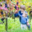 Cute happy boy and his adorable baby sister picking fresh grapes together — Stock Photo #43243663