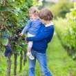 Cute happy boy and his adorable baby sister picking fresh grapes together — Stock Photo #43245275