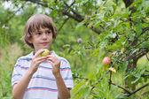 Boy in a garden — Stock Photo