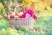 Newborn baby in big basket with apples — Stock fotografie