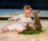 Girl playing with two rabbits — Stock Photo