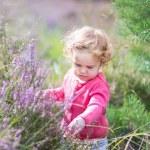 Baby girl walking in purple autumn flowers — Stock Photo #43252395