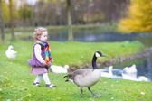 Toddler girl chasing wild geese at a lake — Zdjęcie stockowe