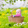 Happy baby in a basket in a blooming apple tree — Stock Photo #46991083