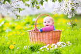 Happy baby in a basket in a blooming apple tree — Stock Photo