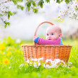 Adorable happy smiling baby boy sitting in a basket playing in a blooming spring apple tree garden — Stock Photo