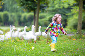 Little girl playing with geese — Zdjęcie stockowe