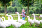 Little girl feeding geese — Zdjęcie stockowe