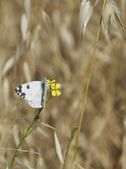 Early butterfly — Stock Photo