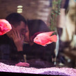 Beautiful couple kissing in restaurant — Stock Photo #43368111