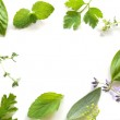 Frame of fresh herbal leaves — Stock Photo #42665053