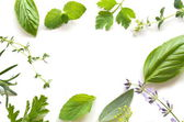 Frame of fresh herbal leaves — Stock Photo