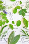 Herbs and science — Stock Photo