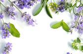 Lavendel en kruiden bladeren — Stockfoto