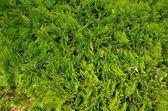 Texture of plant — Stock Photo