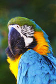 A portrait of a beautiful parrot ara — Стоковое фото