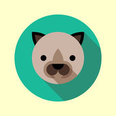 Cute little siamese cat icon — Stock Vector
