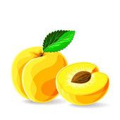 Fresh apricots — Stock Vector