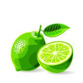 Fresh limes — Stock Vector
