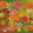 Colorful autumn leaves. — Stock Vector