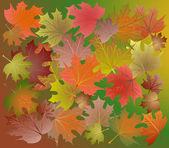 Colorful autumn leaves. — Vector de stock