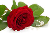 Beautiful red rose with pearls on white — Stock Photo