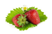 Strawberries on green leaf isolated on white — Stock Photo